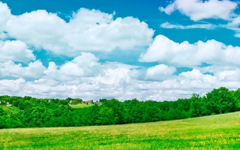 Herramientas y tendencias para el Desarrollo de la Industria Semillera