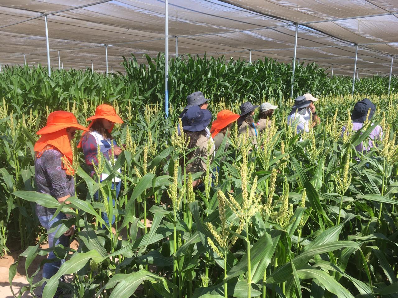 Representantes del SAG visitan instalaciones de investigación y desarrollo en Arica y Parinacota