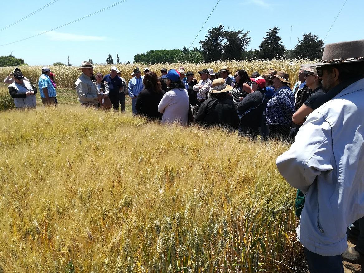 Agricultores del centro sur conocieron en Chillán avances para enfrentar cambio climático en los cultivos