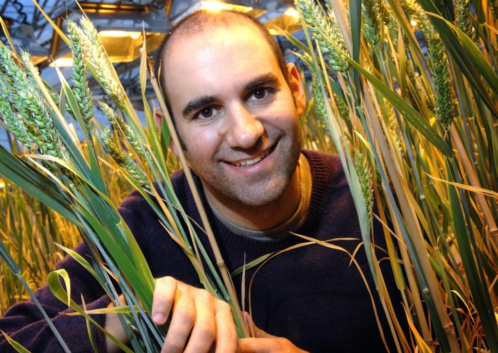 Proyecto dirigido por científico chileno de edición genética del trigo recibe financiamiento europeo