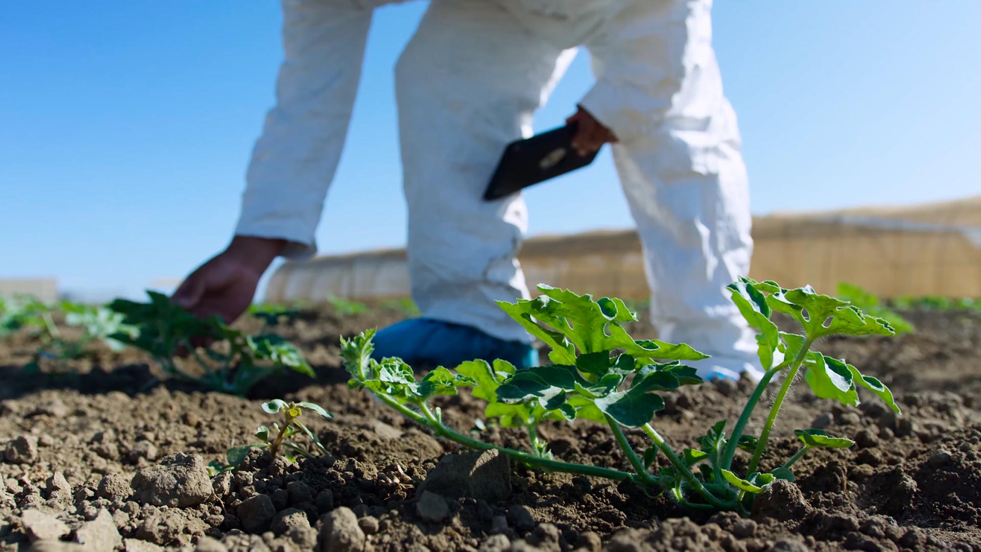 Vicisitudes Legales en el Mundo Agrícola a raíz del Estado de Excepción Constitucional de Catástrofe