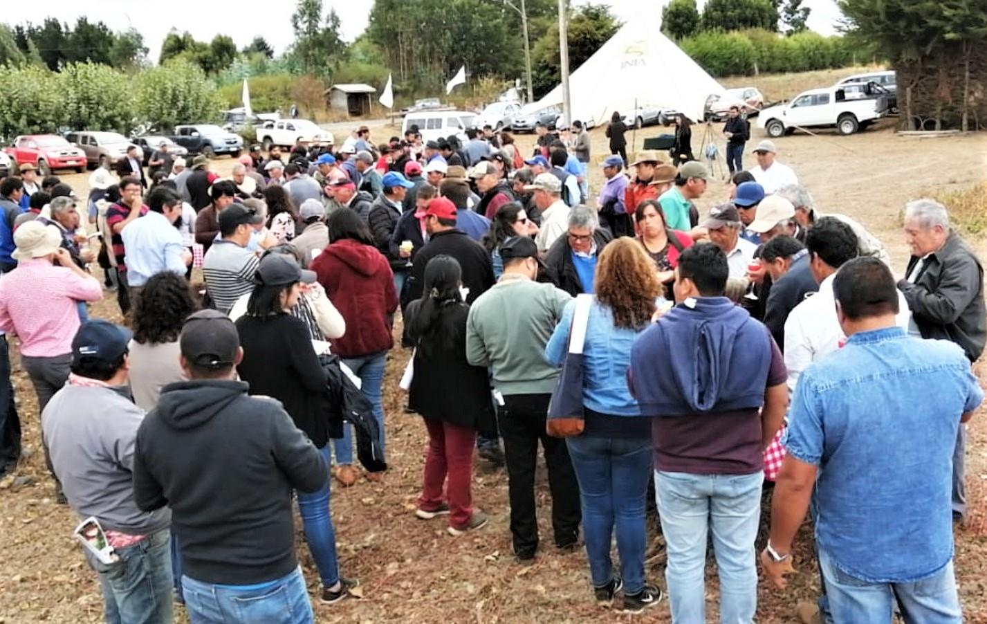 120 agricultores se capacitaron para producir semillas certificadas de papa en Provincia de Arauco