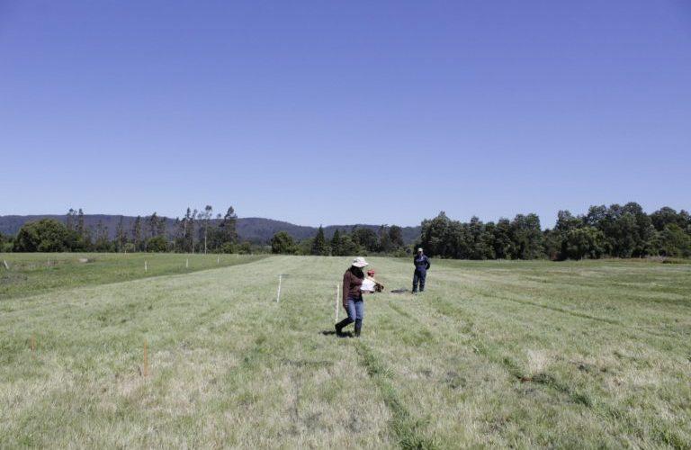 Impacto del COVID-19 en la economía y agricultura