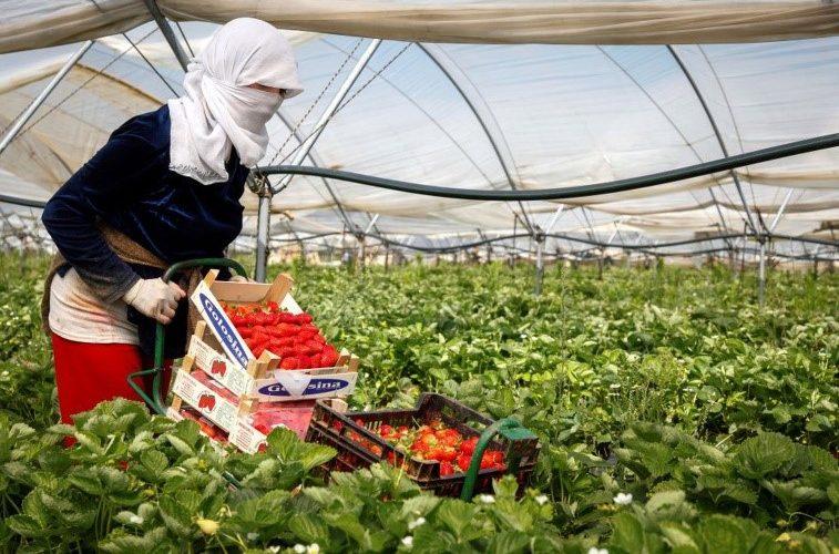 Eventos de caso fortuito o fuerza mayor en la Industria Agrícola chilena a causa del Coronavirus