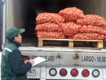 Región de Los Lagos inicia temporada de exportación de semillas de papas