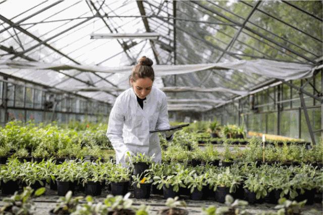 La bioeconomía, una aliada de peso en la recuperación económica post pandemia