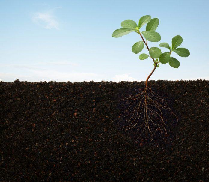 Año Internacional de la Sanidad Vegetal: Protegiendo las Plantas, Protegiendo la Vida