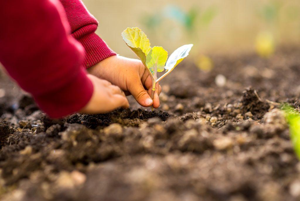 Investigadores identifican un gen que ayuda a las plantas a percibir el calor