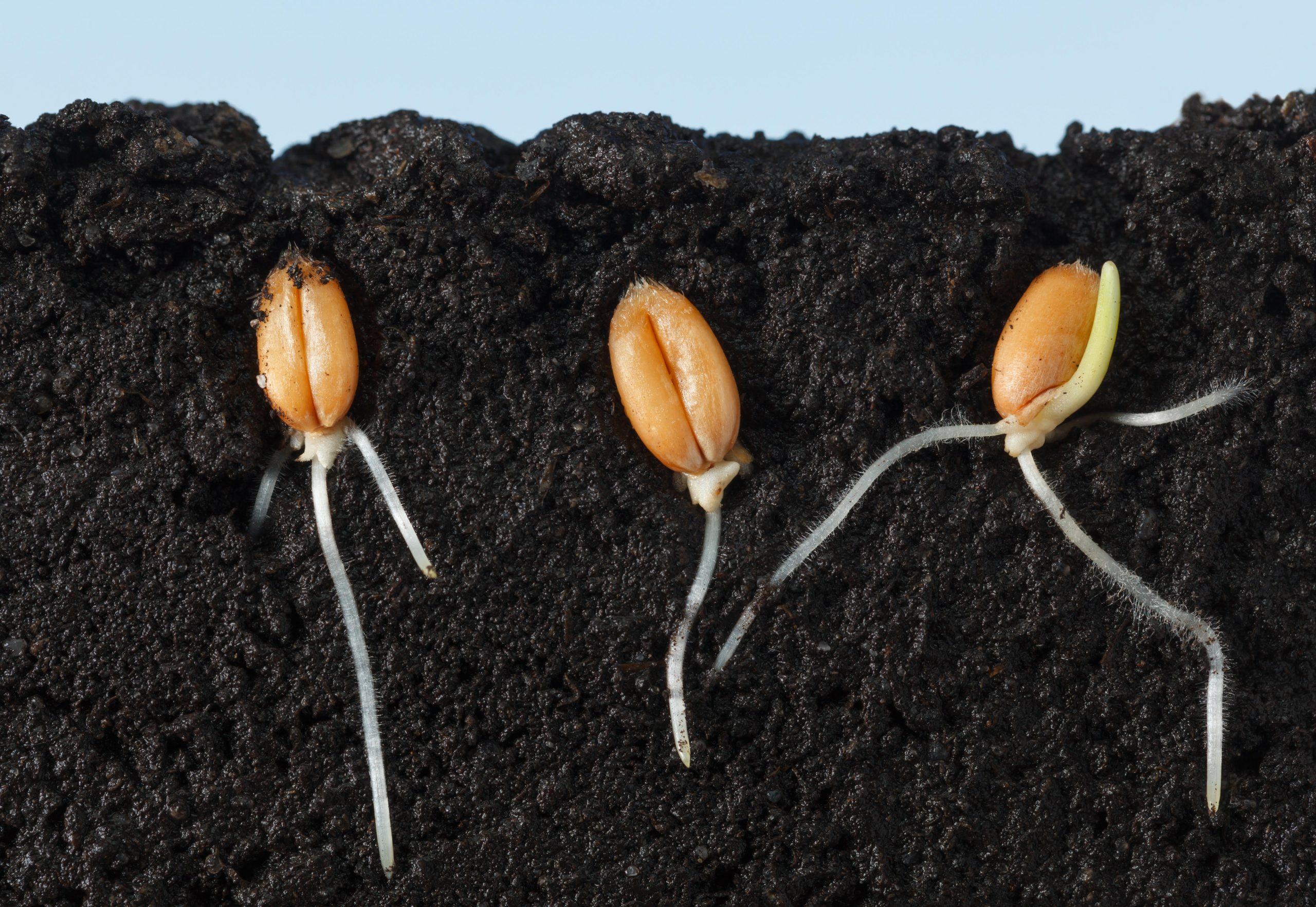 Biotecnología:  Innovar desde la semilla para alimentar al mundo