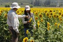 SAG anuncia la fusión de sus divisiones Agrícola y Forestal y Semillas
