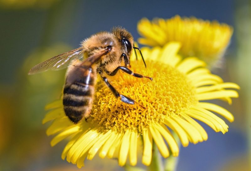 Día de la Miel: INIA fortalece rubro apícola con moderno laboratorio de miel